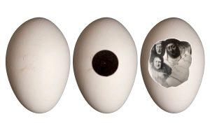Éric Marais, Le concert dans l'œuf, 2014, courtesy Galerie Binome pièce unique prise de vue au stenopé et tirage argentique œuf d'oie, cadre fourreau