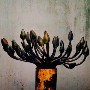John Stewart, série Fleur de lotus, 2010, Galerie Binome